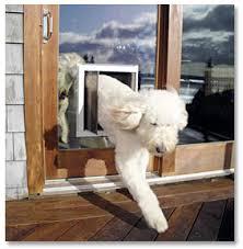 exterior back door with dog door. pet-door-sliding-glass door exterior back with dog o