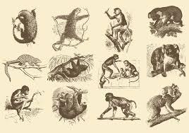 Vintage Illustrations Vintage Illustrations Of Animals Download Free Vector Art Stock