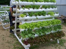 hydroponic herb garden. Hydroponic Garden For Our Shipping Container House | A . Herb