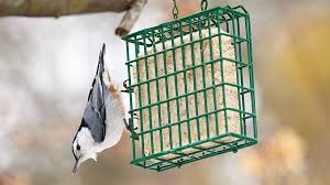 suet cakes are easy to make and provide insect eating birds something to eat in winter when they can t eat the berries and seeds in your garden