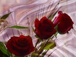 beautiful flowers wallpapers free
