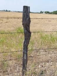 fencepost round wooden fence posts or fence post excellent fence post ideas