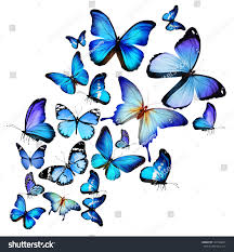 in the time of the butterflies essay in the time of the butterflies essay in the time of the butterflies essay by ryanh anti