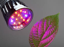 Best Led Light For Plant Growth Red Light Or Blue Light For Plants Effects Of Red And Blue