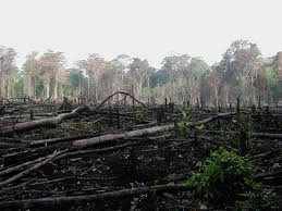 deforestation and afforestation essay buy essay