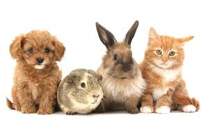 kittens and puppies and bunnies and hamsters. Beautiful Hamsters Puppiesguineapigandkittensandbunniestogether To Kittens And Puppies Bunnies Hamsters N