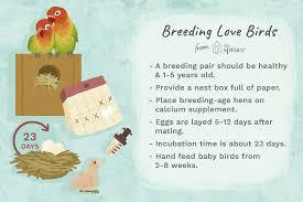 Lovebird Growth Chart Lovebird Breeding Basics Explained