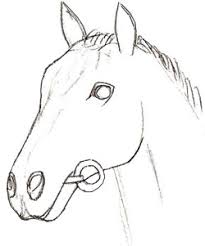 horse head drawing step by step. How To Draw Horse Head Step In Horse Head Drawing By