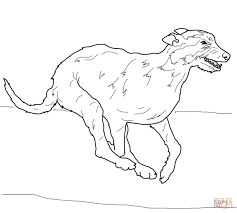 Small Picture Irish Wolfhound coloring page Free Printable Coloring Pages
