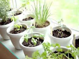 Small Picture Small Home indoor herb garden ideas YouTube