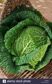 Organic Kitchen Garden Trug Savoy Cabbage Winter Spring Vegetable Crop Home Grown Organic