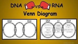Venn Diagram Comparing Dna And Rna Dna Vs Rna Venn Diagram Diagram Dna Student