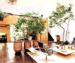 palm tree decor for living room palm tree decor for living room palm trees in the