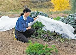 floating row covers woman kneeling in garden lifting cover over super hoops and growing vegetables for