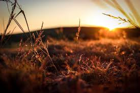 grass field sunset. Free Images : Tree, Nature, Branch, Light, Sun, Sunrise, Sunset, Field, Night, Sunlight, Morning, Leaf, Flower, Dawn, Dusk, Evening, Twilight, Reflection, Grass Field Sunset