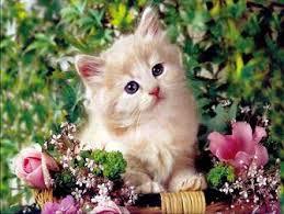 """Résultat de recherche d'images pour """"chats mignons"""""""