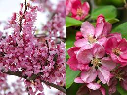 spring flowering trees best choices