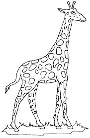 Coloring Giraffe Picture Giraffe Giraffe Coloring Pages Giraffe
