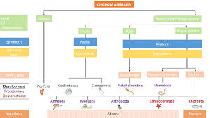 Animal Kingdom Taxonomy Chart Animal Kingdom Simplified Biology