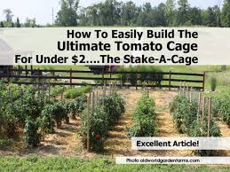 Diy tomato cage Gardens How To Easily Build The Ultimate Tomato Cage For Under 2u2026the Stakeacage Home Tips World How To Easily Build The Ultimate Tomato Cage For Under 2u2026the Stake