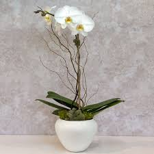 best orchid gift delivery greenwich stamford rye riverside old greenwich
