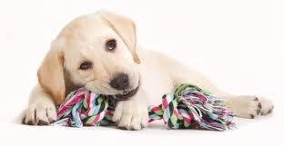 so what should dog toys for heavy chewers be made of