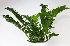 Видът растение, светлина, напояване и температура са важни фактори. Stajni Rasteniya Za Mrachnite Ktcheta V Doma Flat Bg Flat Bg