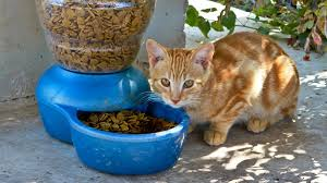 commercial cat food for kidney disease. Beautiful For Using Nutrition To Manage Diseases In Cats With Commercial Cat Food For Kidney Disease E