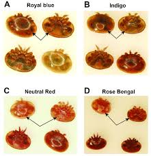 The Visual Detection Of Dyes In The Varroa Mite After
