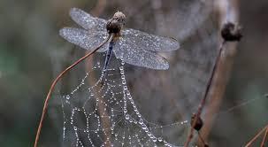 """Résultat de recherche d'images pour """"pixabay toile d'araignée sur les fleurs"""""""