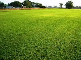 green grass football field. Grass. 5 Care Tips For A Greener Lawn Grass Green Football Field