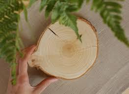 <b>Срез</b> дерева - Береза. <b>Подставка</b> из дерева | Лес домой