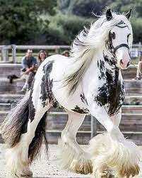 KINGSPOINT GYPSY VANNER HORSE <b>PEWTER BEJEWELED</b> ...