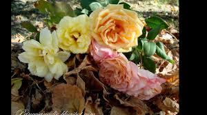 Lombrico GardenCuidados De Los Rosales