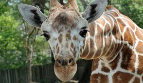 animals in zoo pictures.  Animals Adopt An Animal For Animals In Zoo Pictures