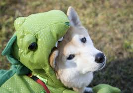your ultimate dog costume guide