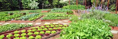 Michelle Obama Kitchen Garden The White House Garden Is Here To Stay Inhabitat Green Design