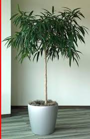 plants for office cubicle. Cheery Plants For Office Cubicle S