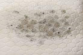 Der schimmelpilz sitzt überall, wo es feucht ist: Schimmel Auf Der Matratze Verhindern Betten Abc Magazin