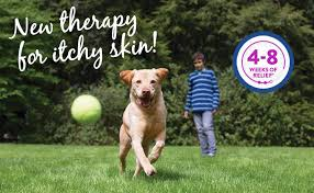 Dogs With Itchy Skin | Fort Street Veterinarian