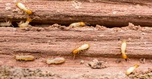 Image result for How To Keep Your Home Termite Safe