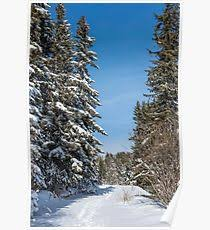 outdoor woods backgrounds. Snow Winter Snowing Landscape Blizzard Non Urban Scene Backgrounds Tree Sky Forest Snowflake Scenics Wintry Blue Nature January Woods Frost White Beauty In Outdoor R