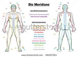meridian system chart female body principal stock vector 564151213 Meridian Lines Body Map meridian system chart german labeling! male body with acupuncture meridians, anterior and meridian lines body map
