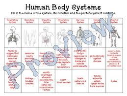 Human Body System Chart Under Fontanacountryinn Com