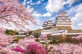 Bunga Sakura Simak Jadwal Mekarnya Bunga Sakura Di Jepang Kumparan Com