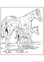 Small Picture 118 best horse color pages images on Pinterest Horse coloring