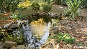 beautiful small garden pond with frog