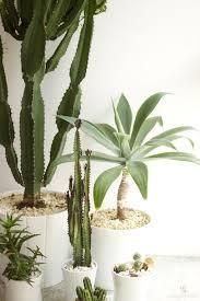 Accessories: Indoor Cactus Decor Ideas - Indoor Garden