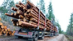 Doi frați, bătuți de șoferii unor camioane care transportau lemne, la Orăștie - Stirileprotv.ro