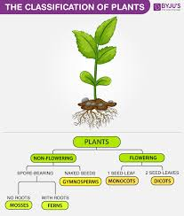 Plant Kingdom Classification Chart For Kids The Classification Of Plants Annuals Biennials And Perennials